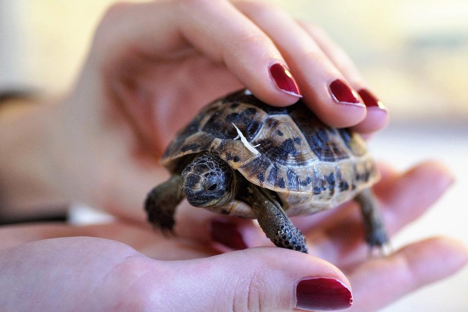 tortue terrarium