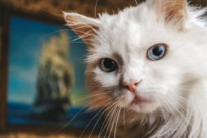 angora-chat